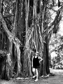 The Banyan Tree, West Martello Botanical Garden, Key West