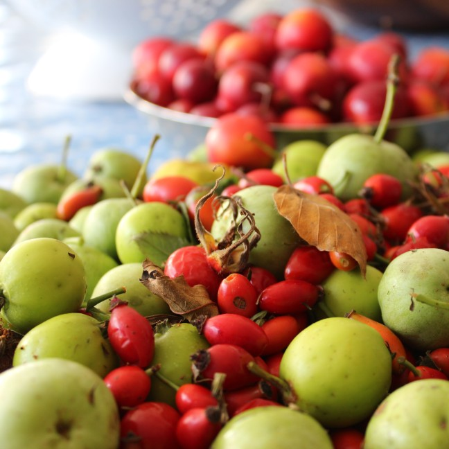 wild crab apples, rosehips and japonica.